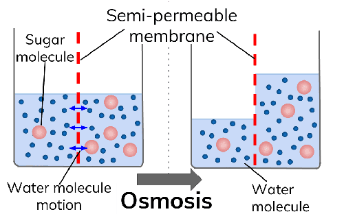 Top Similarity And Difference Between Osmosis And Diffusion